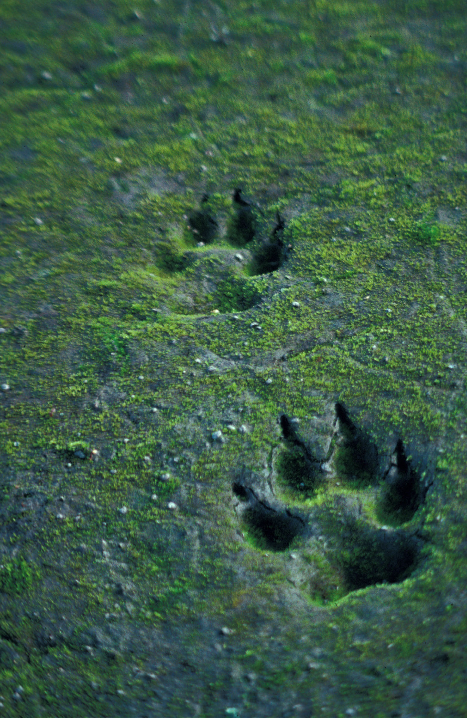 The Path Of The Lone Wolf * Shamanism | Contemporary Shaman