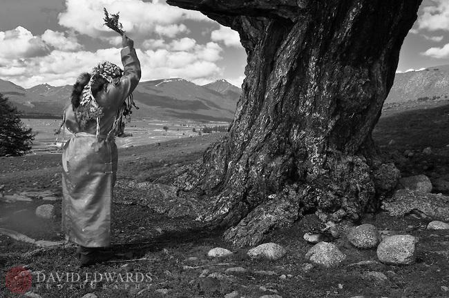 Blessing-shaman-tree-W-Mongolia