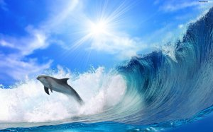 dolphin-07